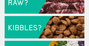 Raw? Kibbles? OR Cooked Food? (Which One Is Better For Dog)