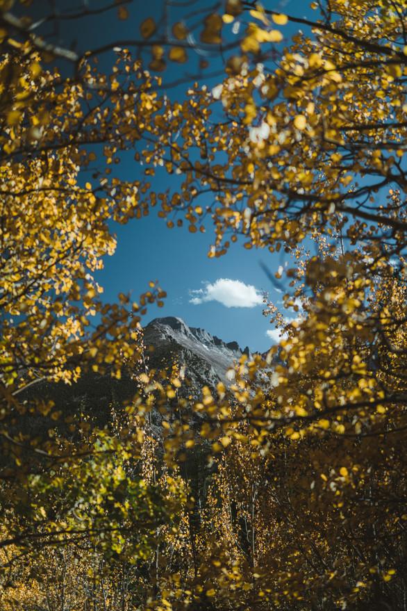 Colorado Golden Trees