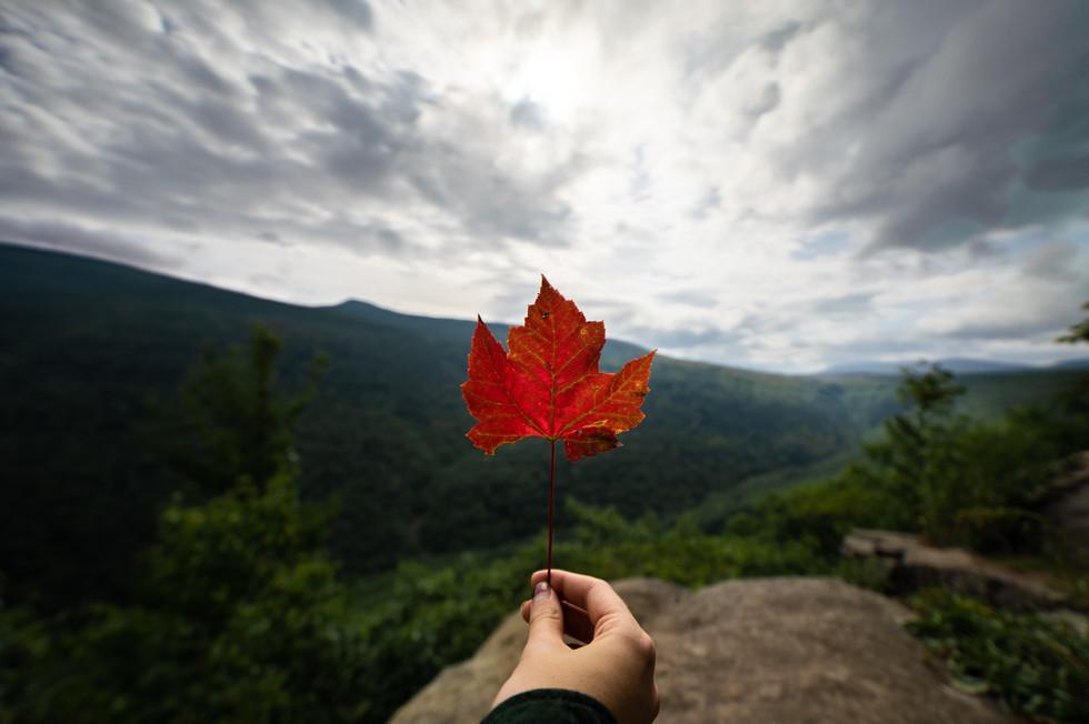 Catskills Fall Leaves