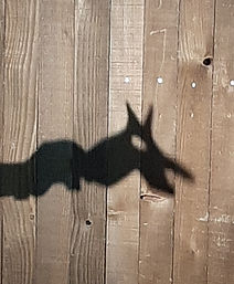 Loup ombre.jpg