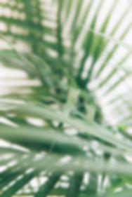 Plante au Salōn Marais