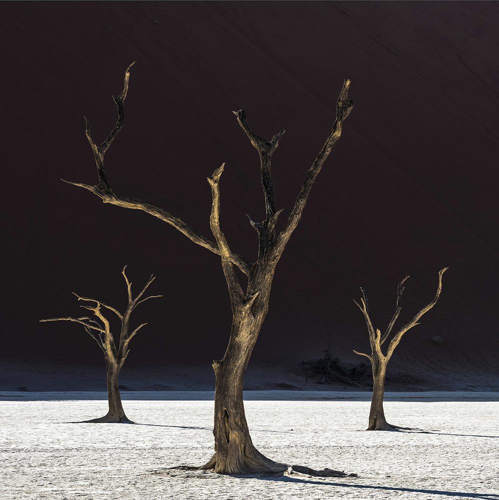 McAllester Namibia Deadvlei 3 Trees 72 d