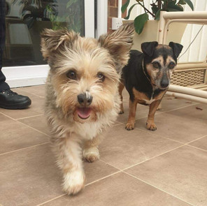 HOLLY & MOLLY - ADOPTED