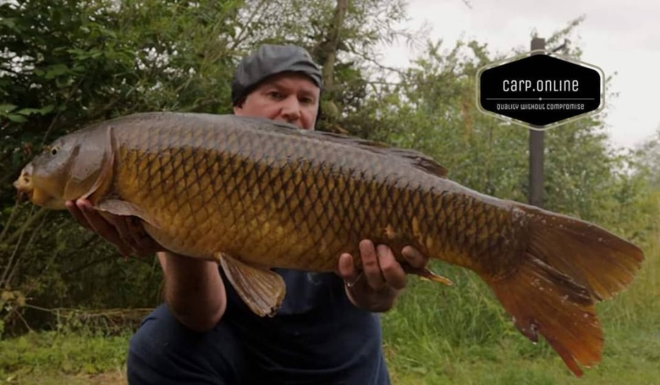 Carp Tackle Online - Common Carp