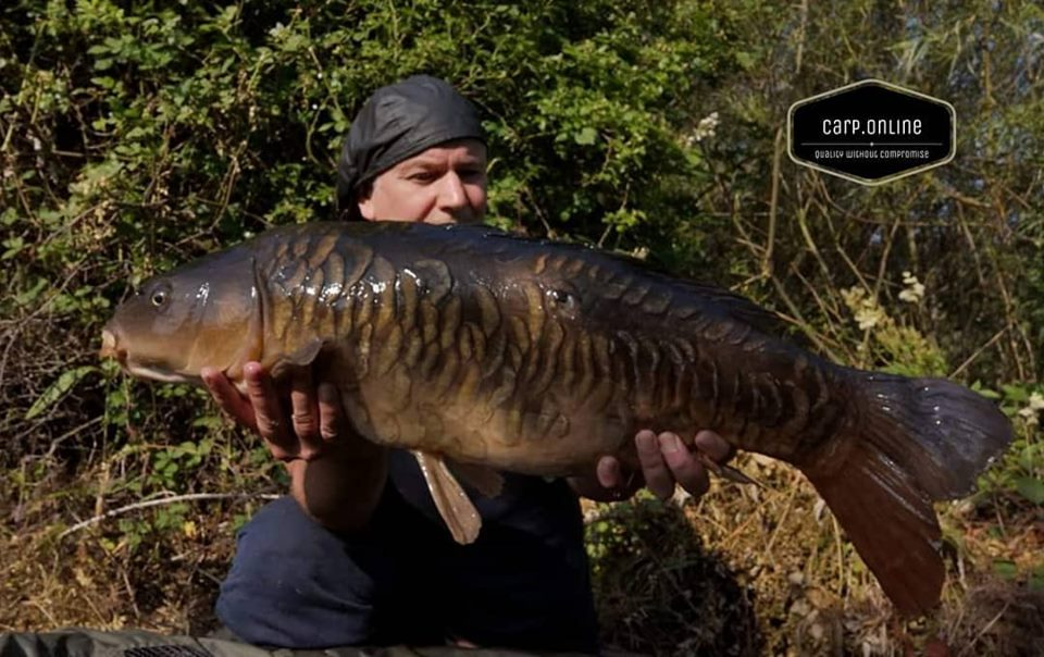 Carp Tackle Online - Proper Scaly Mirror