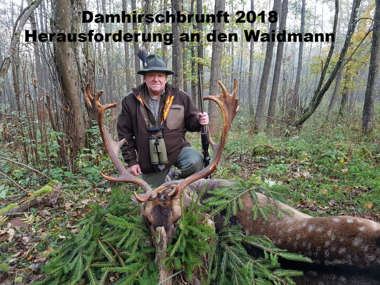 damhirsch_edited