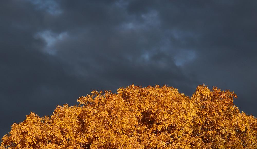 Gold leaves against dark sky