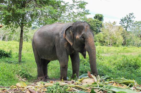 Phuket Elephant Park 4.jpg