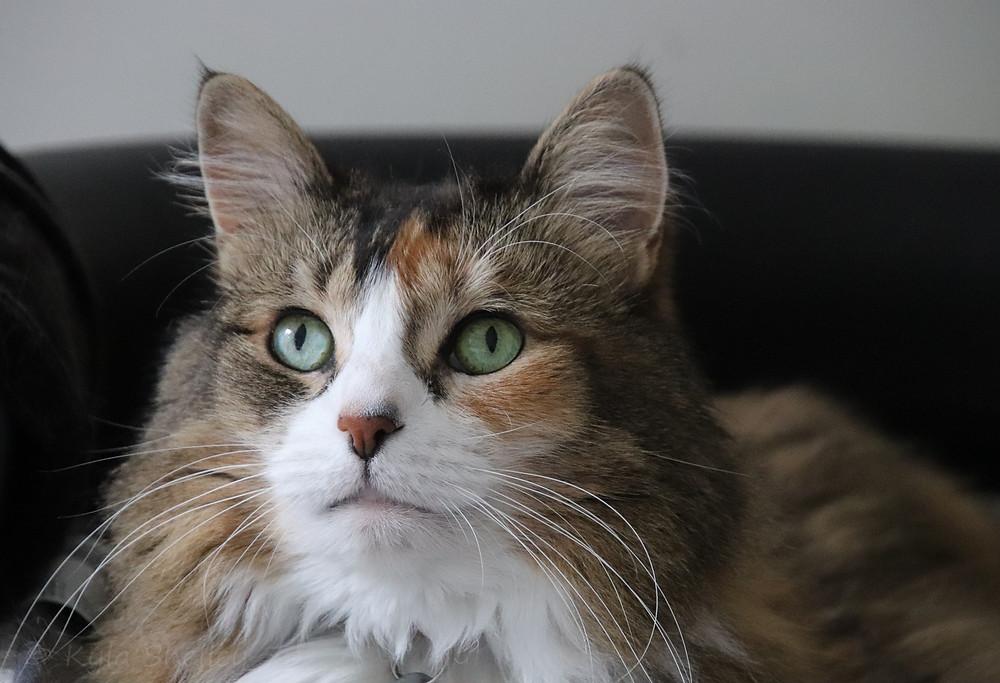 My Cat, Bella