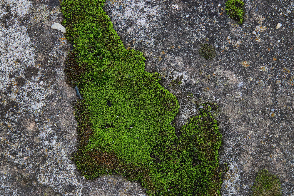 Moss on Path