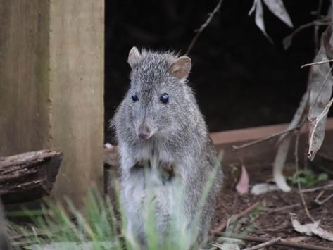 First Visit to Aussie Ark