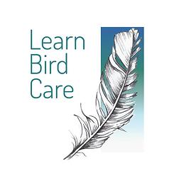 LBC Logo PNG.png