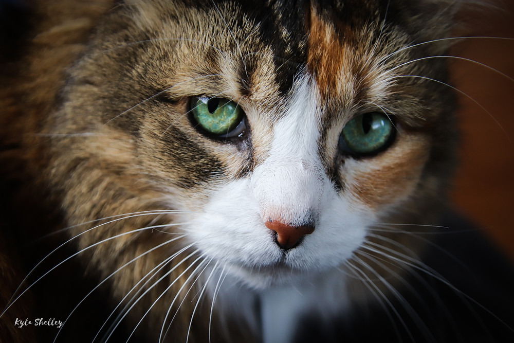 Bella Cat