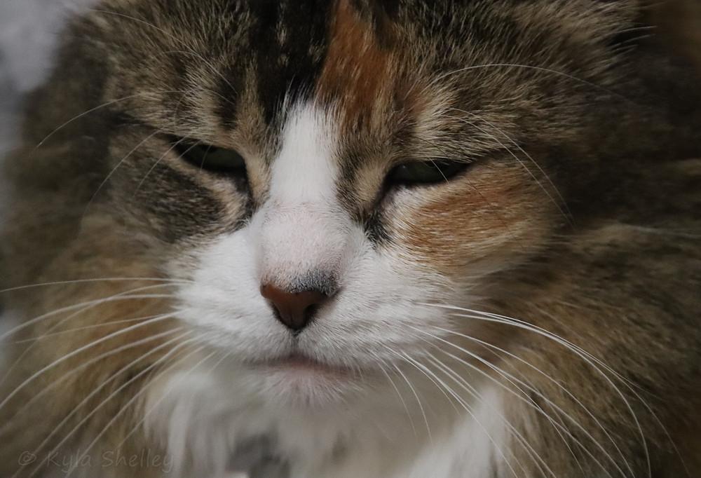 Cat, Bella