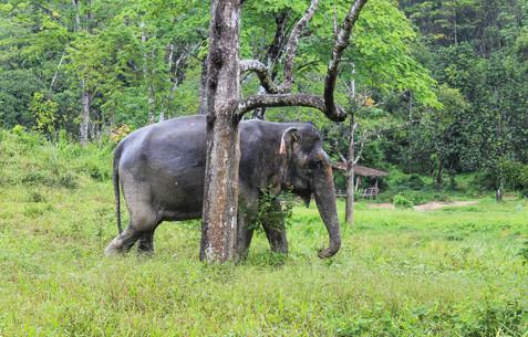 Phuket Elephant Sanctuary 3.jpg