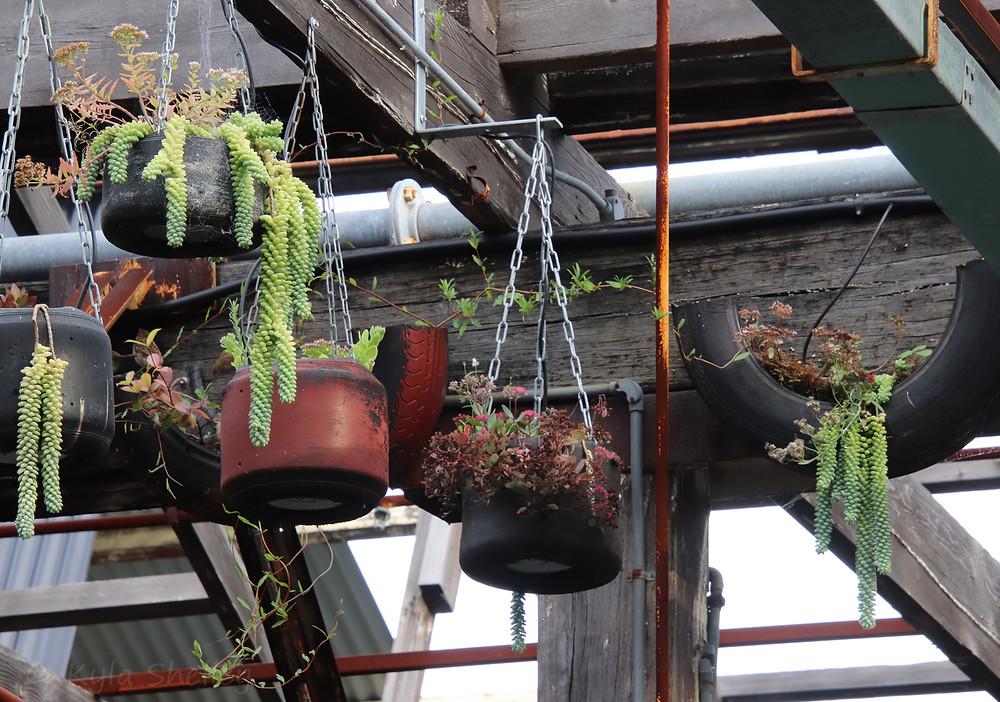 Plants hanging in industrial carpark