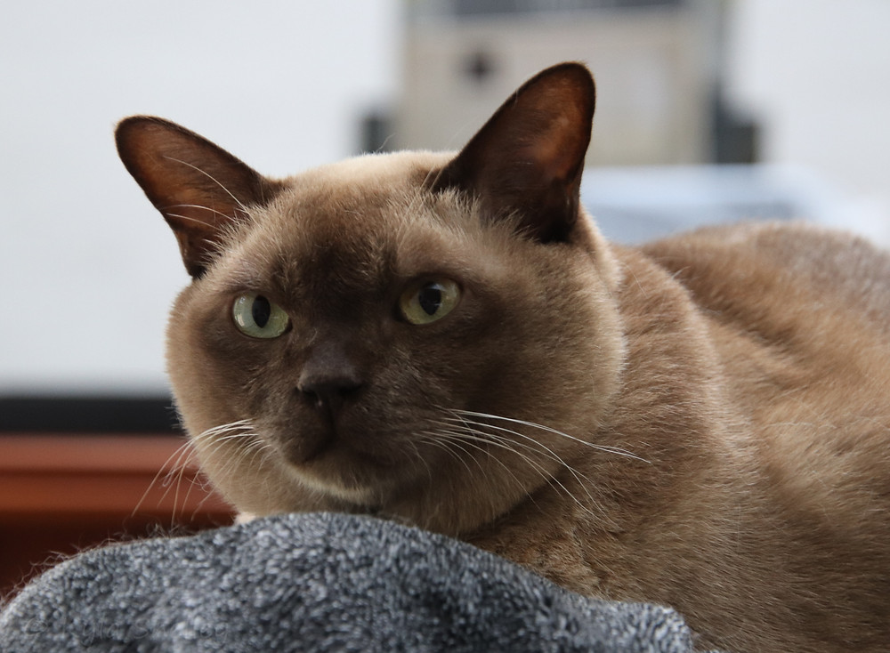 My friend's cat - Leo