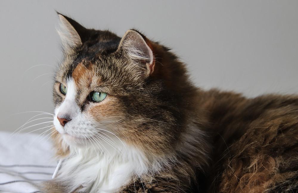 My beautiful cat Bella