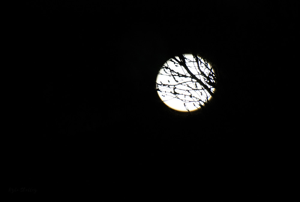 Moon with trees in front