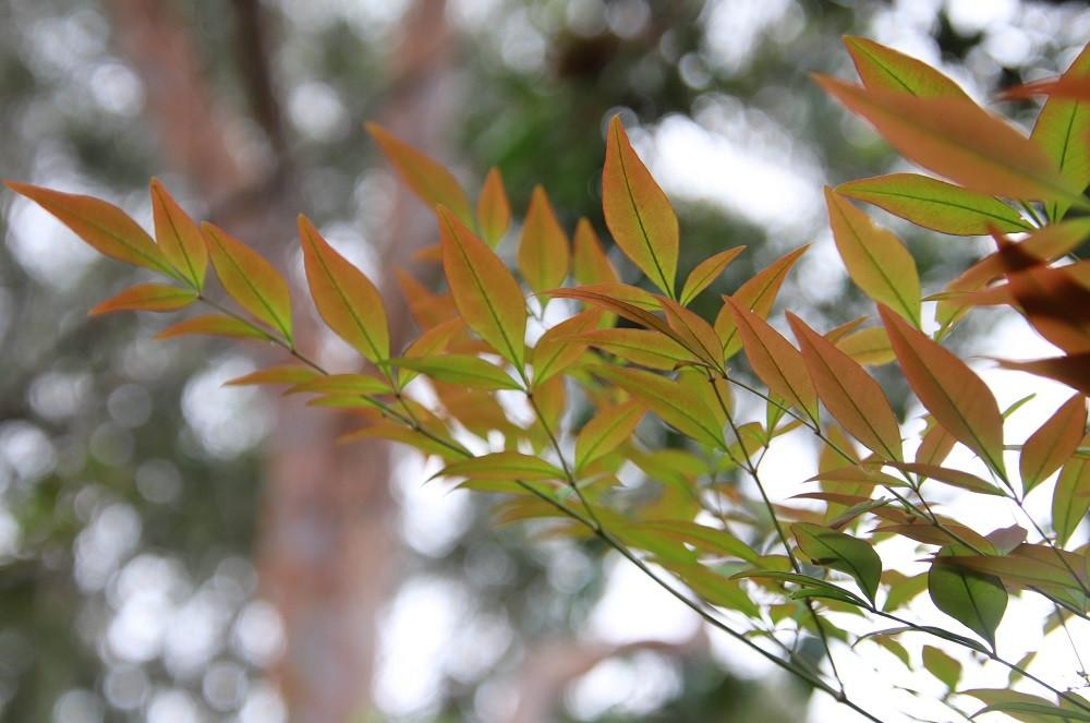 Leaves on tree in garden