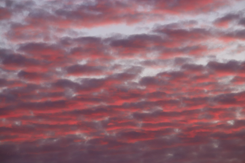 Rows of Pink Clouds