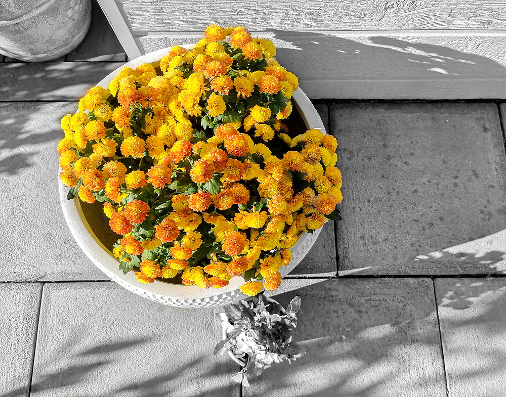 Yellow and Orange Flowers in Pot