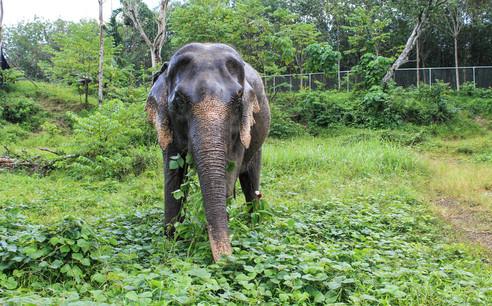 Phuket Elephant Sanctuary 5.jpg