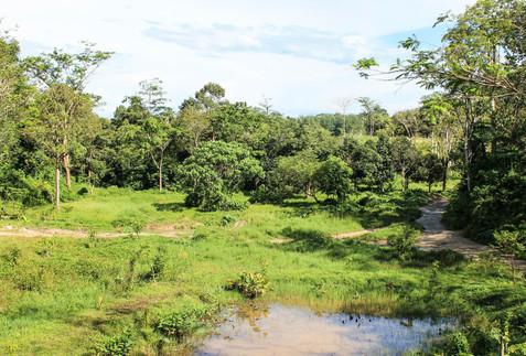 Phuket Elephant Sanctuary 6.jpg
