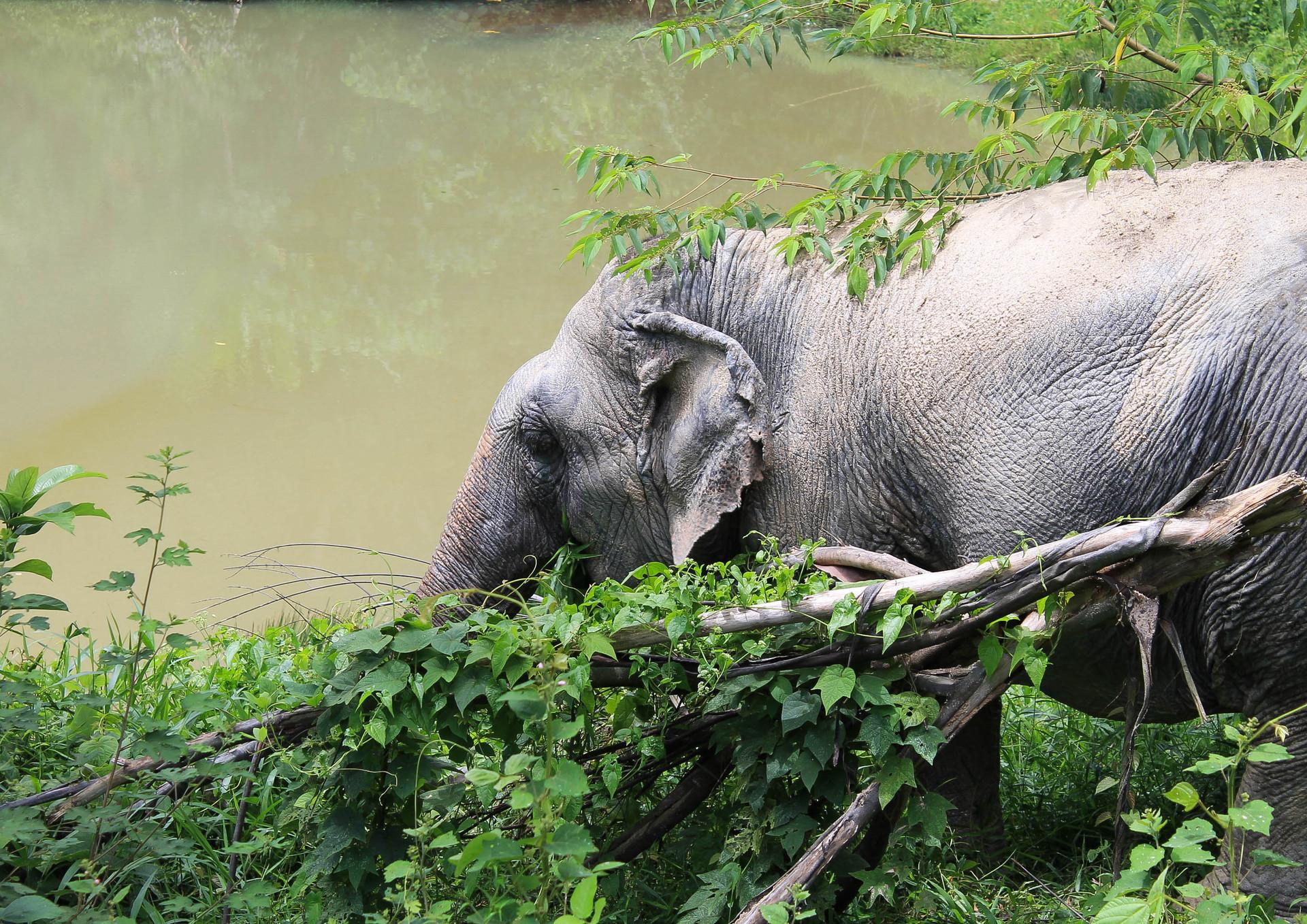 Phuket Elephant Park 7.jpg