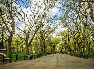 central-park-trees.jpg