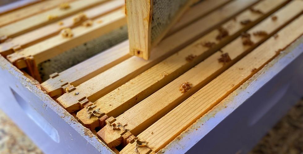 Frames Full of Honey
