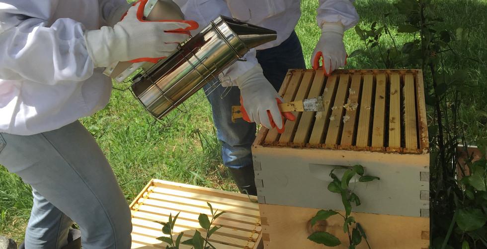 Backyard Beekeepers