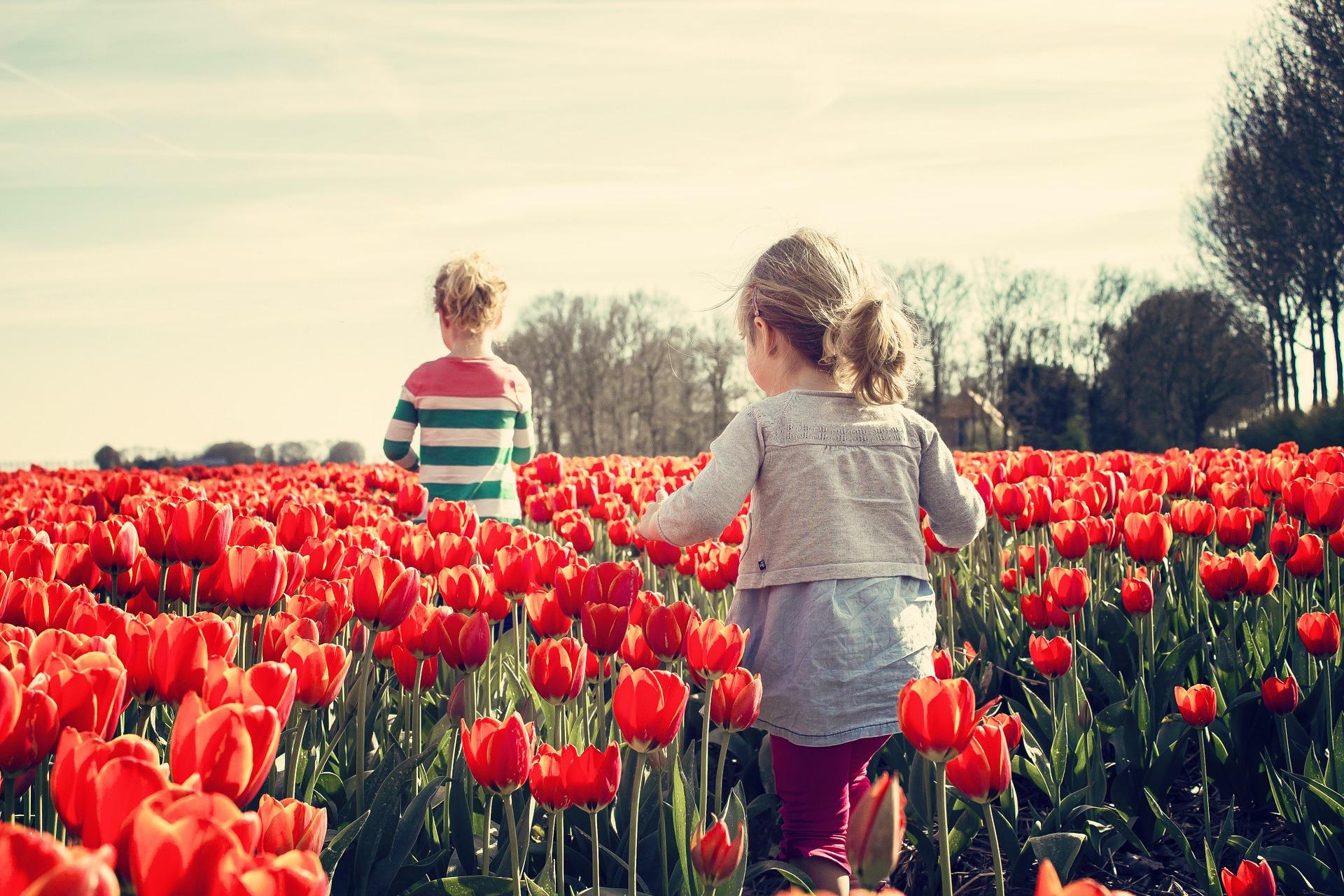 Tulipe de la Torche
