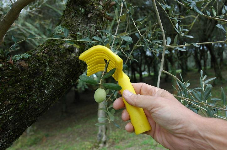 foto's voor folder olijfolie (6).JPG