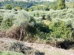 olijfgaard 2011