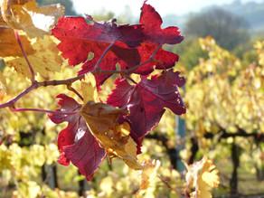 De schoonheid van Umbrië in de herfst
