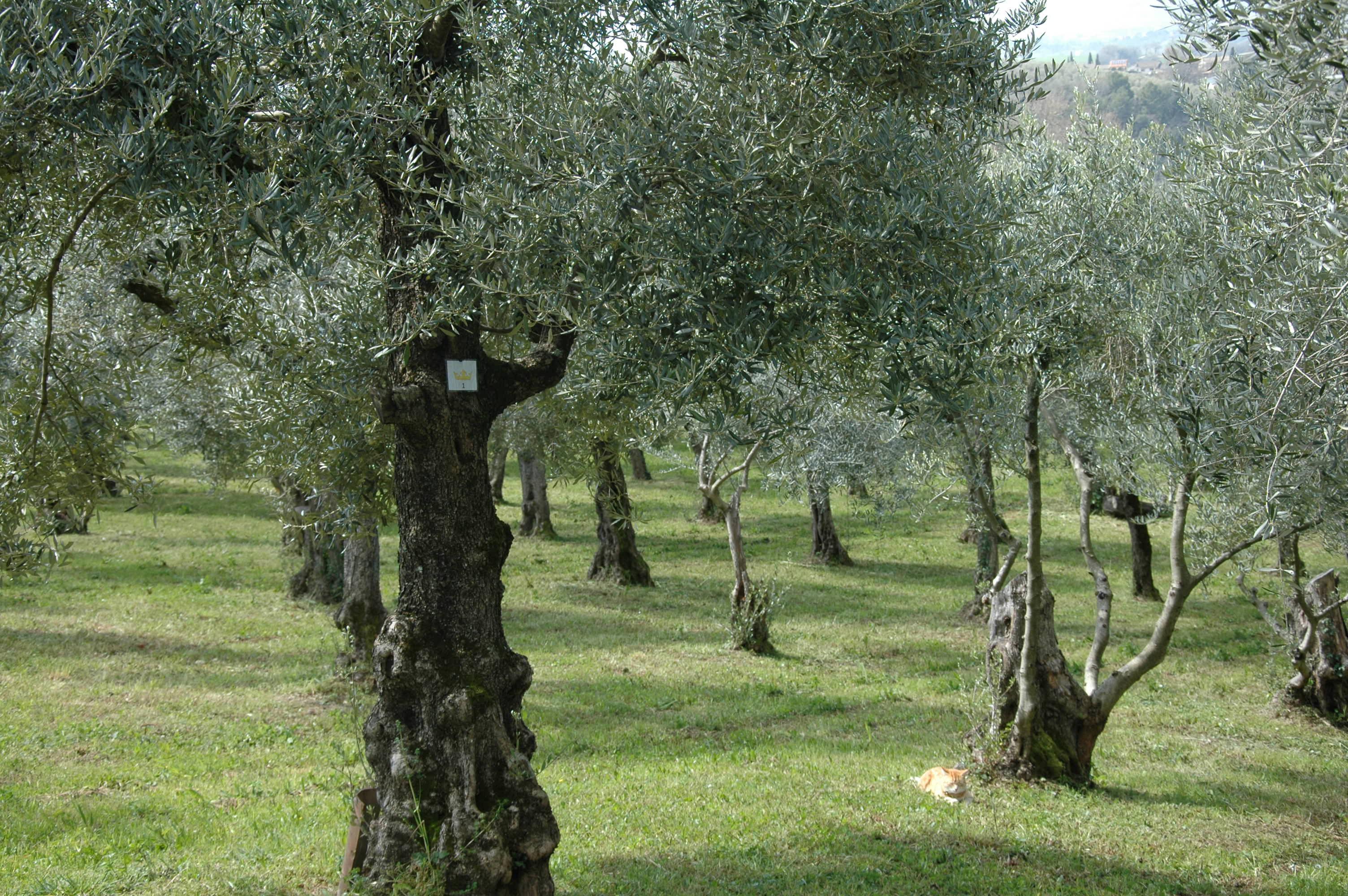 olijfgaard 2020