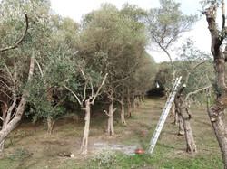 olijfgaard 2013