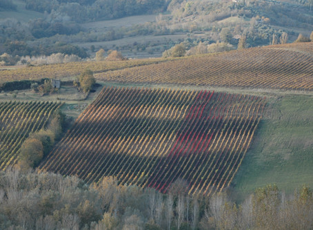 Tongstrelende Umbrische wijnen