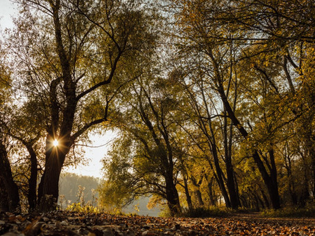 Aufforstung - Bäume pflanzen gegen den Klimawandel