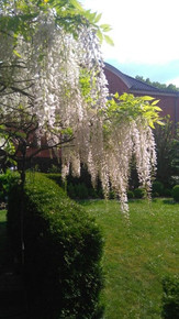 Baum-Ferienwohnung-am-Kurpark-lueneburg-