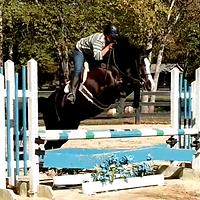 Horse trining at Altogether Farm - Georgia