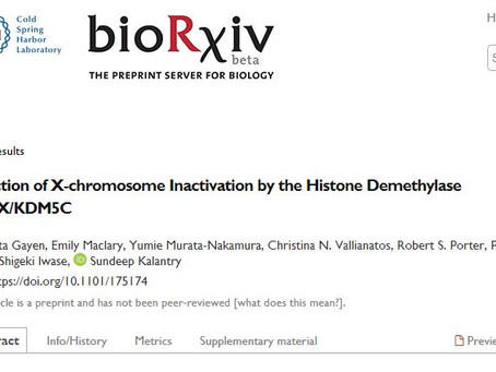 SMCX/KDM5C in X-inactivation. Collaboration with the Kalantry lab posted on BioRxiv.