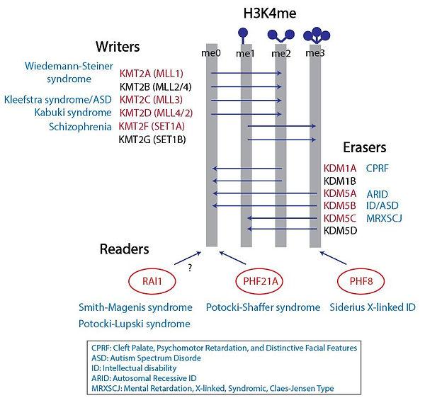 H3K4methylopathies_5.JPG