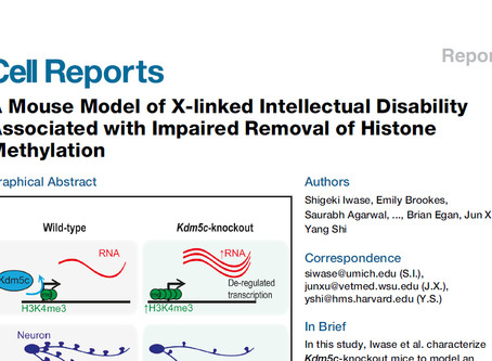 Kdm5c-KO mouse paper published