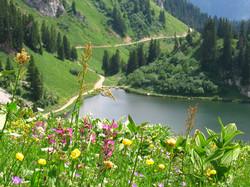 Lac d'Arvoin : faune et flore