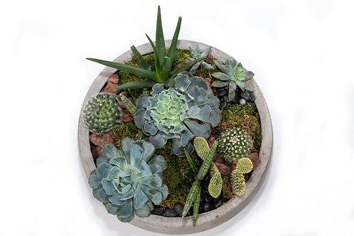 Succulent Dish, Large