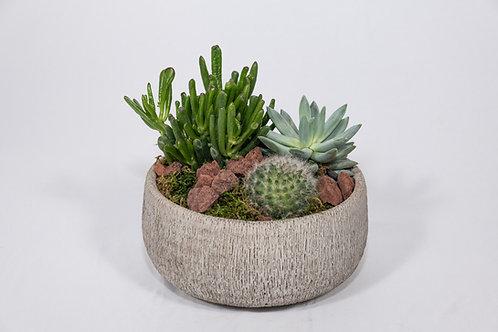 Succulent Dish, Medium