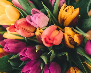 Frühlingsrosen