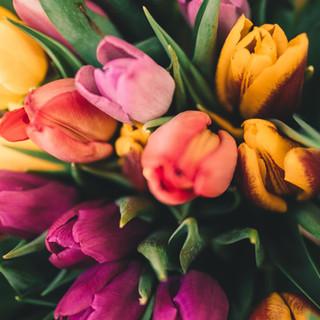Spring Roses
